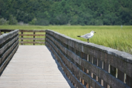 A bird sits on a railing