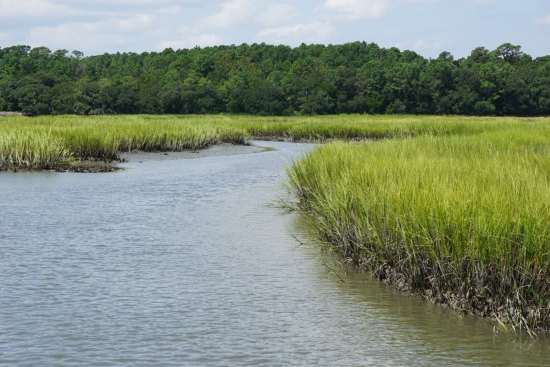 Stream through the marsh