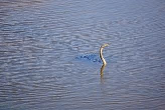 A bird that enjoys fishing