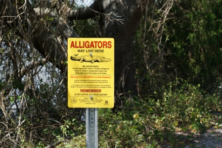 We see alligators every time we go.