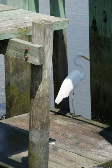 My favorite picture - a white bird hanging out on a walkway.