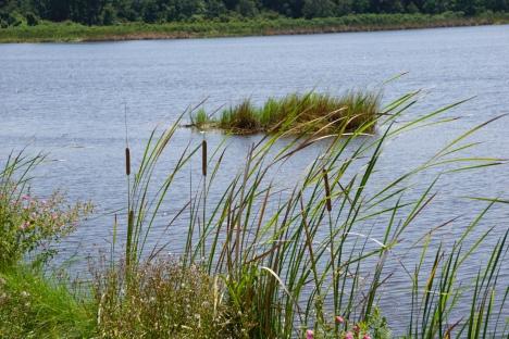 Pretty marsh landscape.