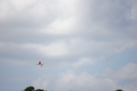 A roseate spoonbill getting out of dodge.