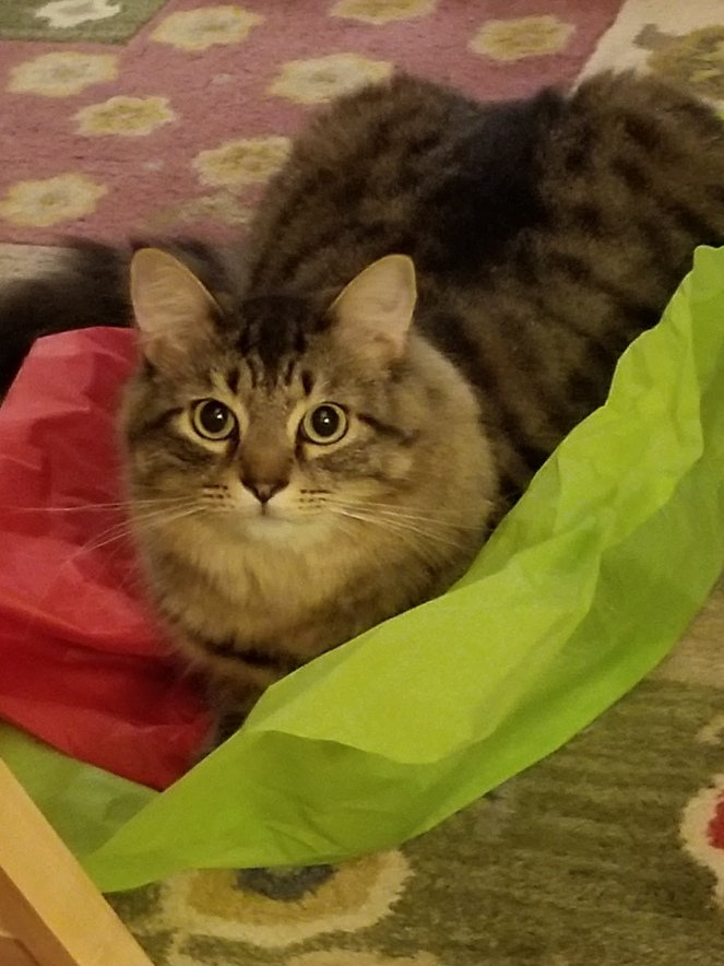 image of a cat on red and green tissue paper