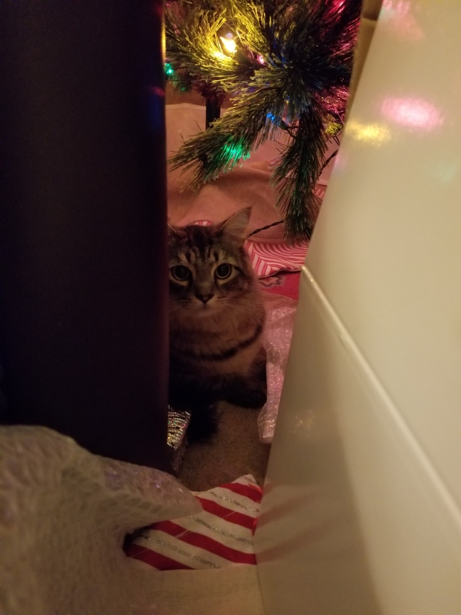 image of a cat hiding behind a couch and under the Christmas tree. He looks startled.