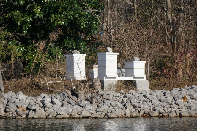 An image of 4 bee boxes on an island.