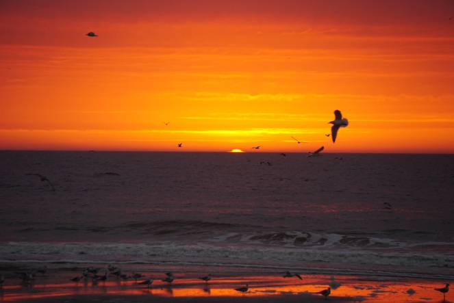 Image of a sunrise at the beach with a bird in the foreground